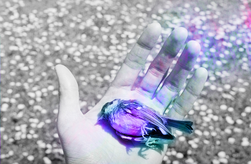 """A`RNO piece titled """"Birdie"""", from Sunny Days (Photopoetry Book), inkjet print, purple dead bird in someone's hand"""